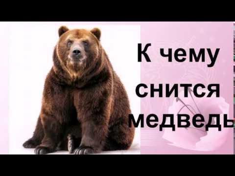 Медвежонок во сне: чего опасаться?