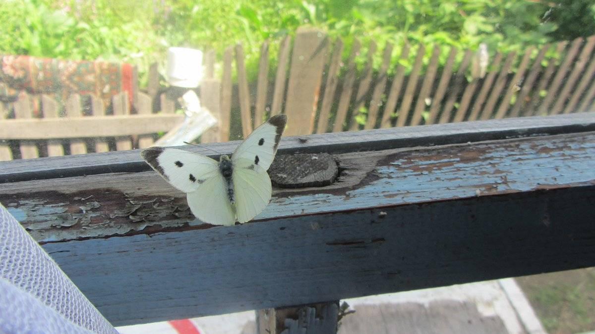 Чего ждать если бабочка залетела в дом