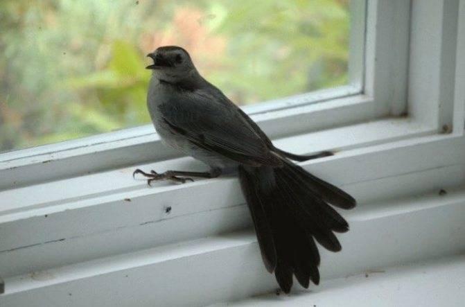 Примета: залетела птица на балкон, к чему это и как предупредить беду