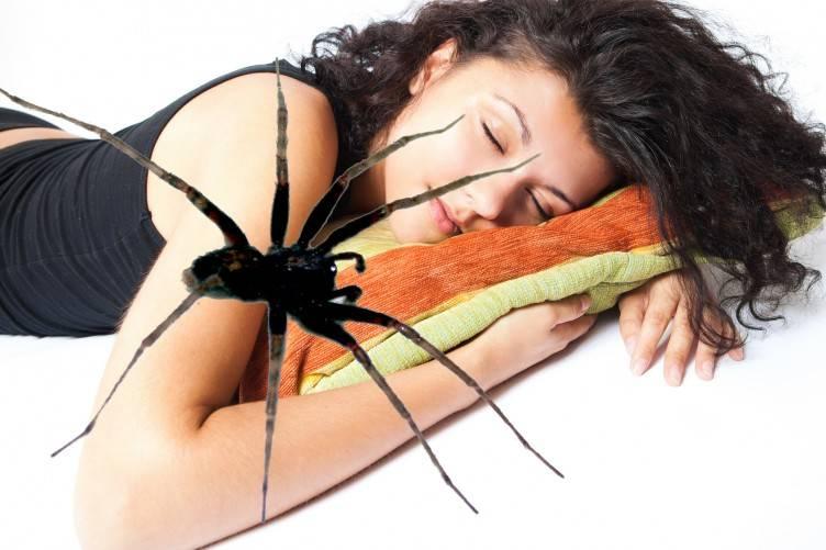 Сонник паук. к чему снится паук во сне женщине и мужчине