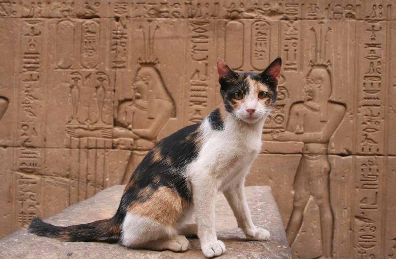 Кошка и женская энергетика. что означает кошка в доме