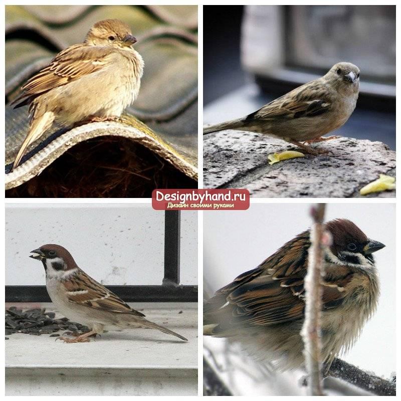 Примета: что, означает если птица залетела в дом, на балкон, что делать, если влетела ласточка, голубь, синичка, воробей, кукушка