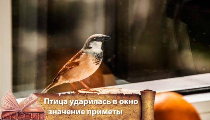 Птица ударилась в окно и улетела. что значит примета