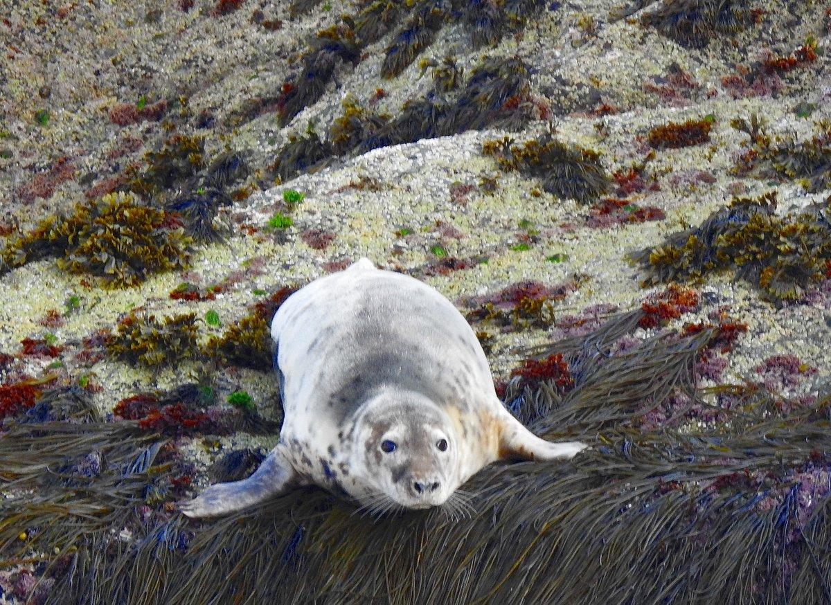 Шелки — тюлени оборотни, способные превращаться в людей