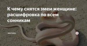 Сонник змея. к чему снится змея во сне женщине и мужчине