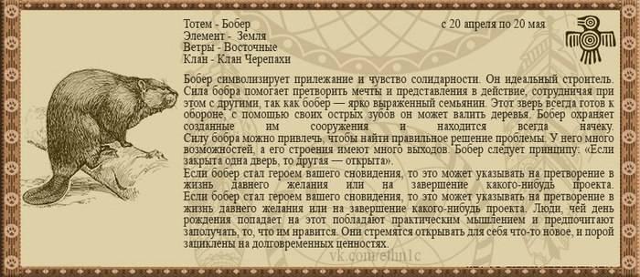 Гороскоп славянский животных 2020 по годам описание тотема