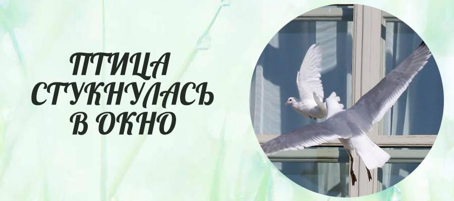 Птица ударилась в окно и улетела: толкование приметы