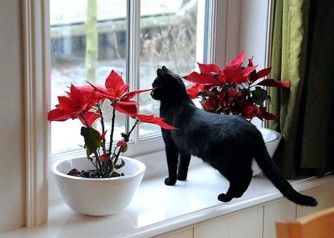 Приметы о котах разных мастей