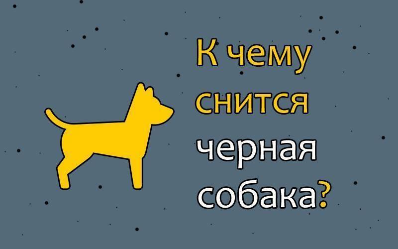 Сонник собака белая большая. к чему снится собака белая большая видеть во сне - сонник дома солнца
