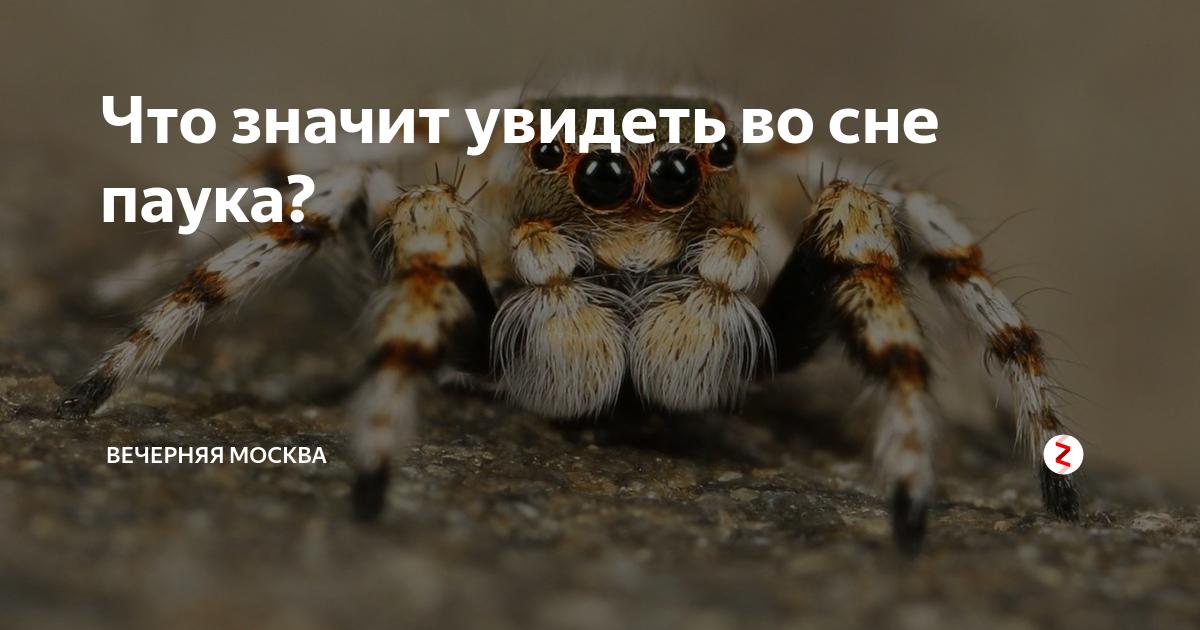Сонник искать паука. к чему снится искать паука видеть во сне - сонник дома солнца