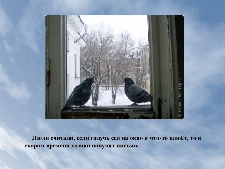 Народная примета, если голубь сел на подоконник за окном