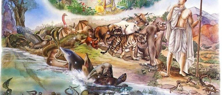 Можно ли в следующей жизни родиться животным