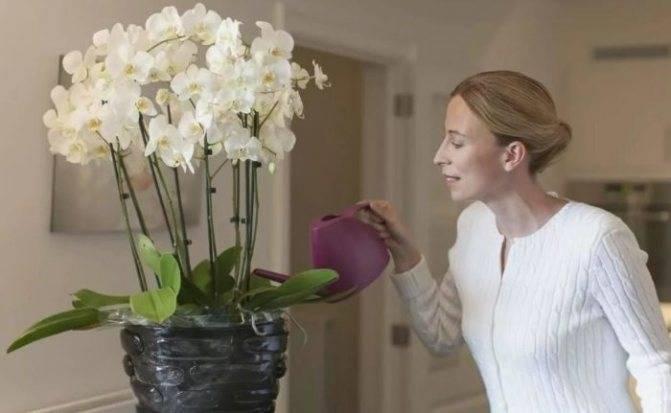 Орхидея дома - суеверия и приметы про мой любимый цветок