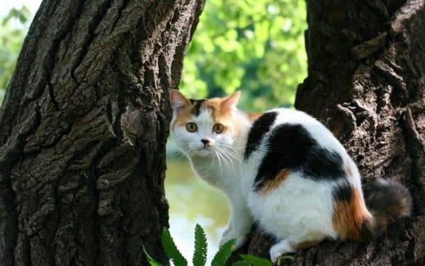 Приметы о содержании дома трёхцветной кошки