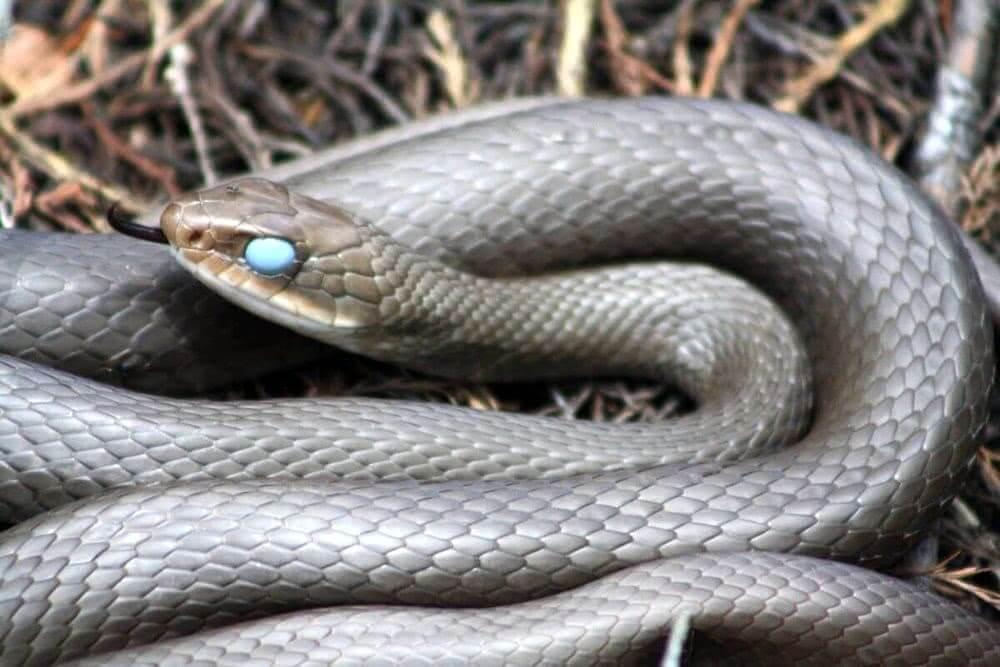 К чему снится маленькая змея?