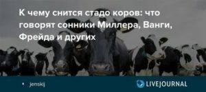 К чему снится корова женщине по сонникам