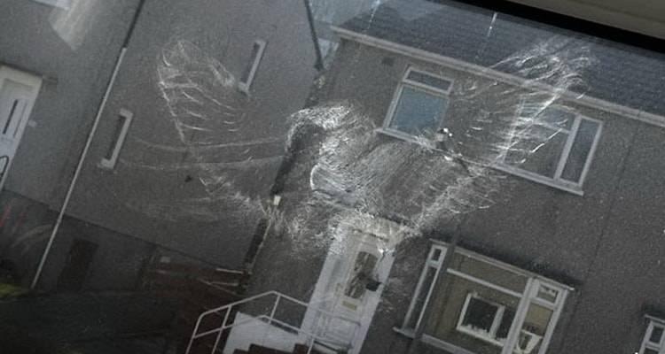 Что предвещает, если птица ударилась в окно и улетела?