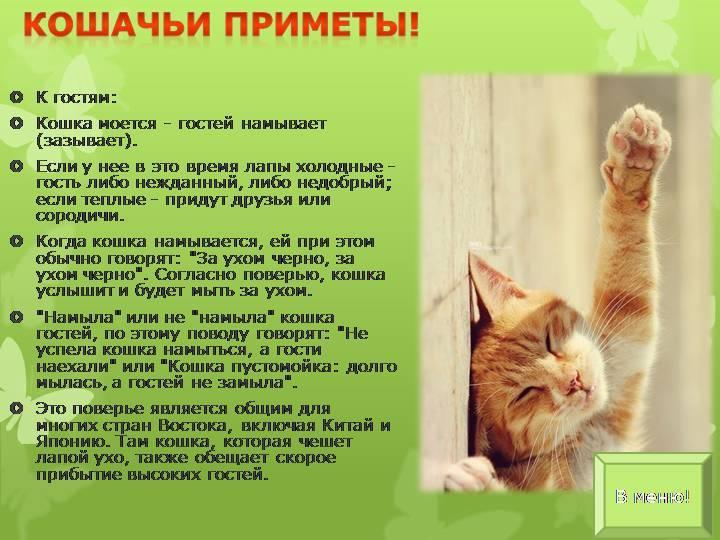 Приметы, суеверия и поверья про кошек в доме