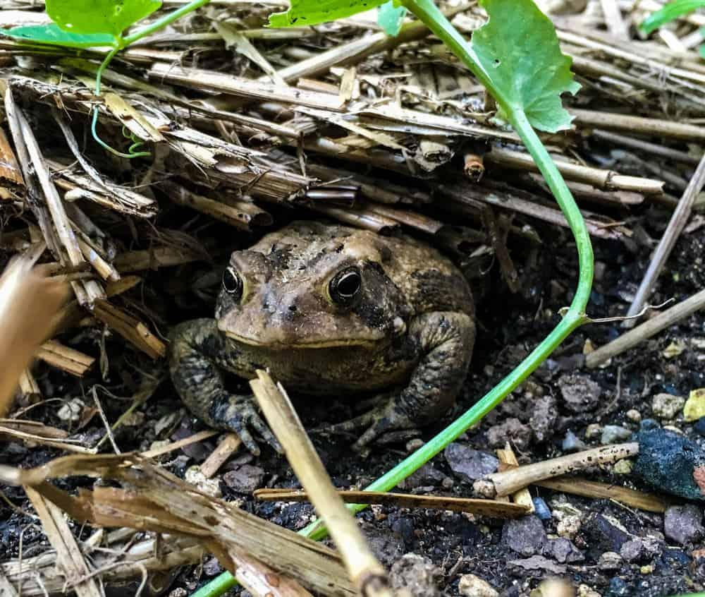 Все приметы о лягушках и жабах