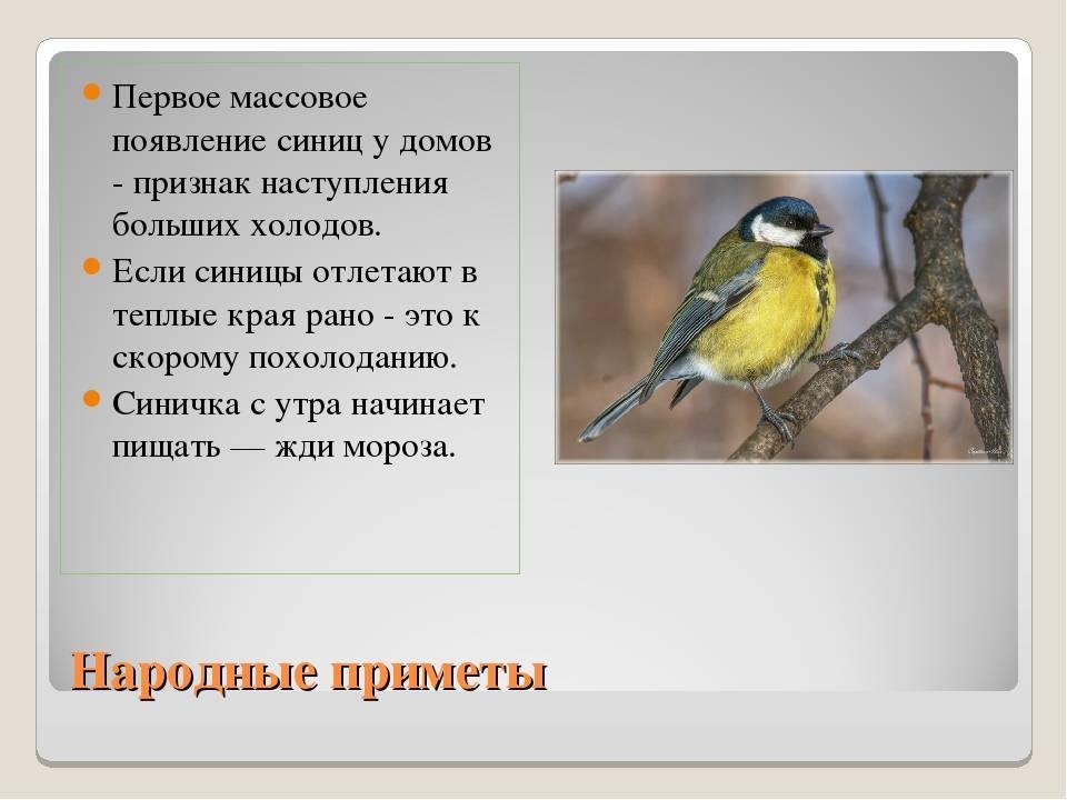 Приметы про перо птицы