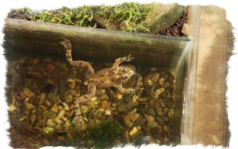 Примета: лягушка в доме, к чему квакают