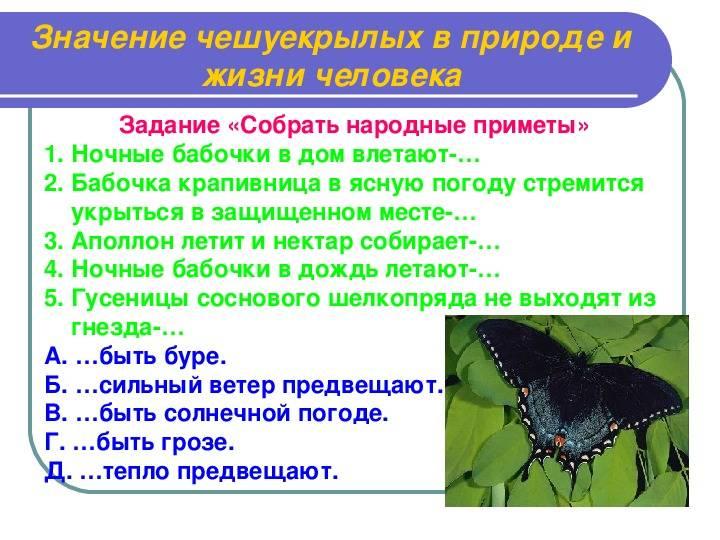 Оракулы в перьях: разбираем приметы о соловье, дятле и других птицах