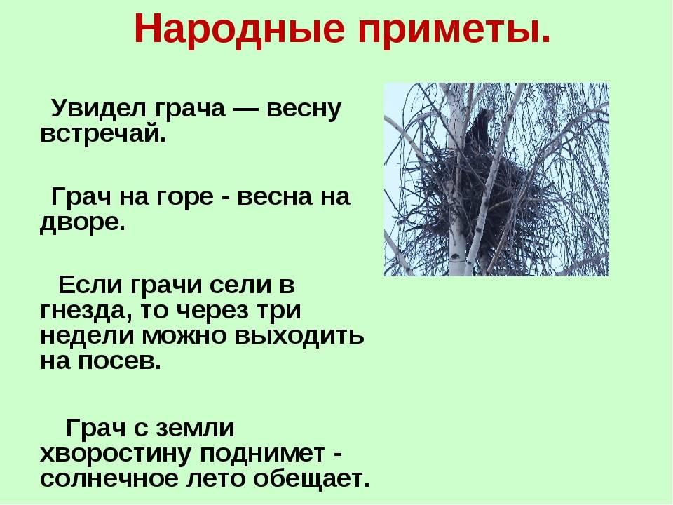 Носов «как ворона на крыше заблудилась. приметы про ворон — что говорили наши предки