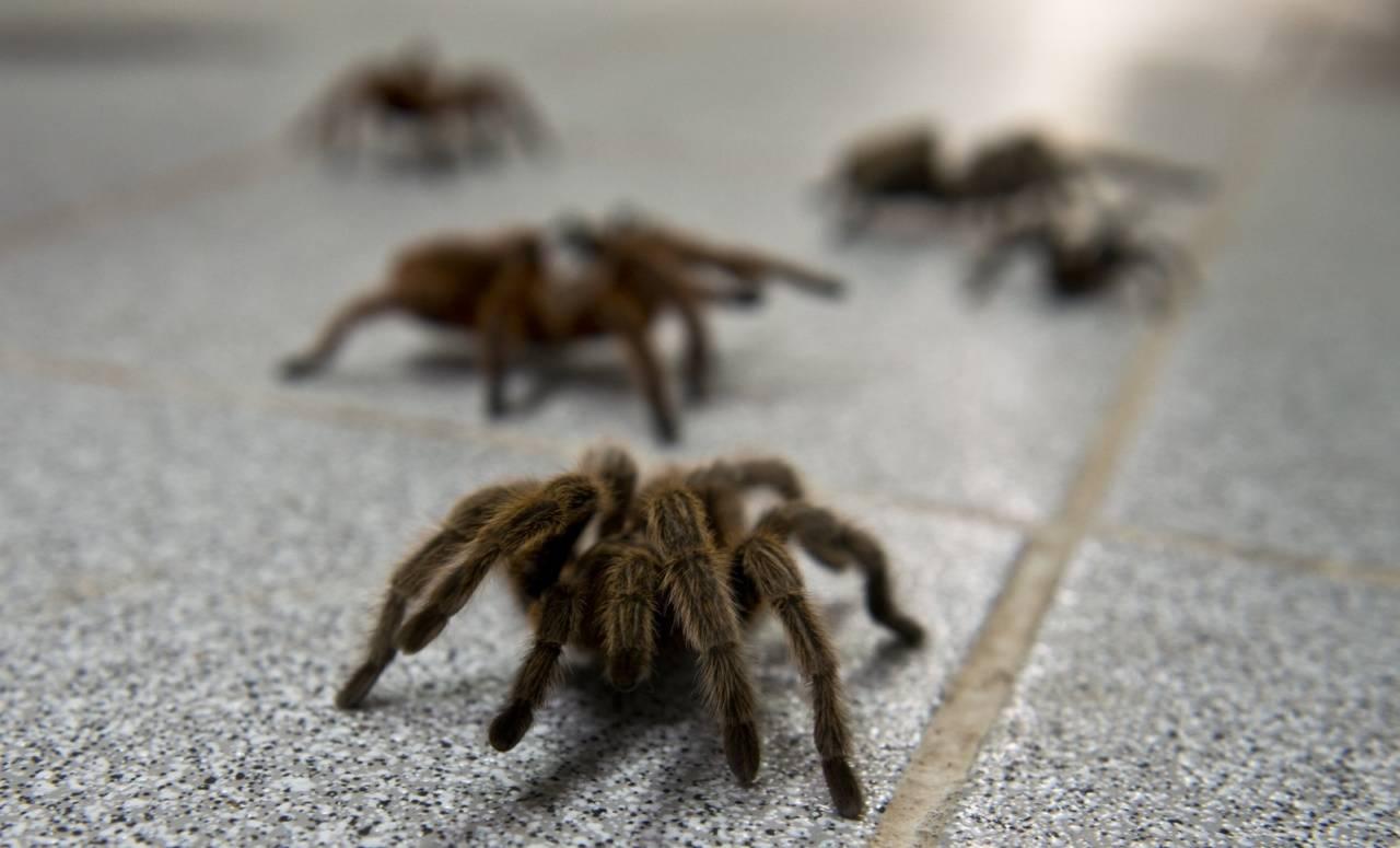 Сонник убивать много пауков. к чему снится убивать много пауков видеть во сне - сонник дома солнца