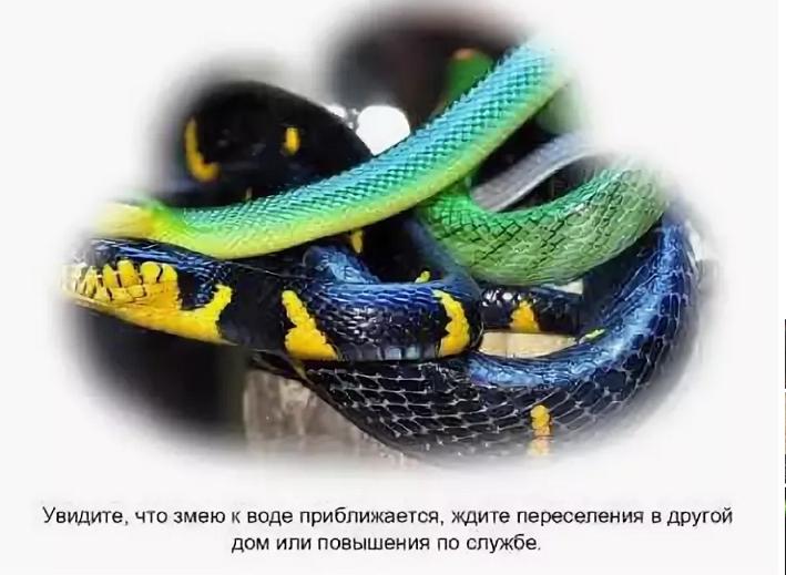 Убиваю много змей