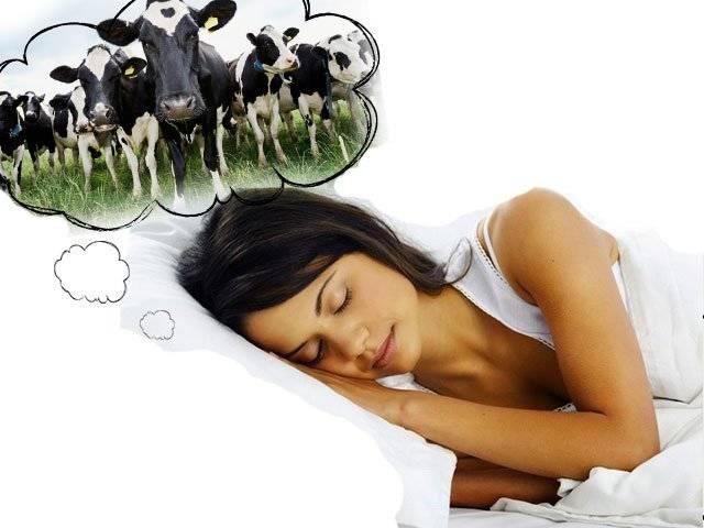 К чему снится корова - сонник