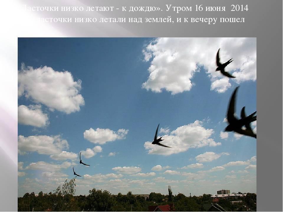 Примета: ласточки низко летают - фантастический мир