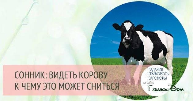 К чему снится корова - женщинам и девушкам, одна и в стаде, трактовки различных сонников к чему снится корова - женщинам и девушкам, одна и в стаде, трактовки различных сонников