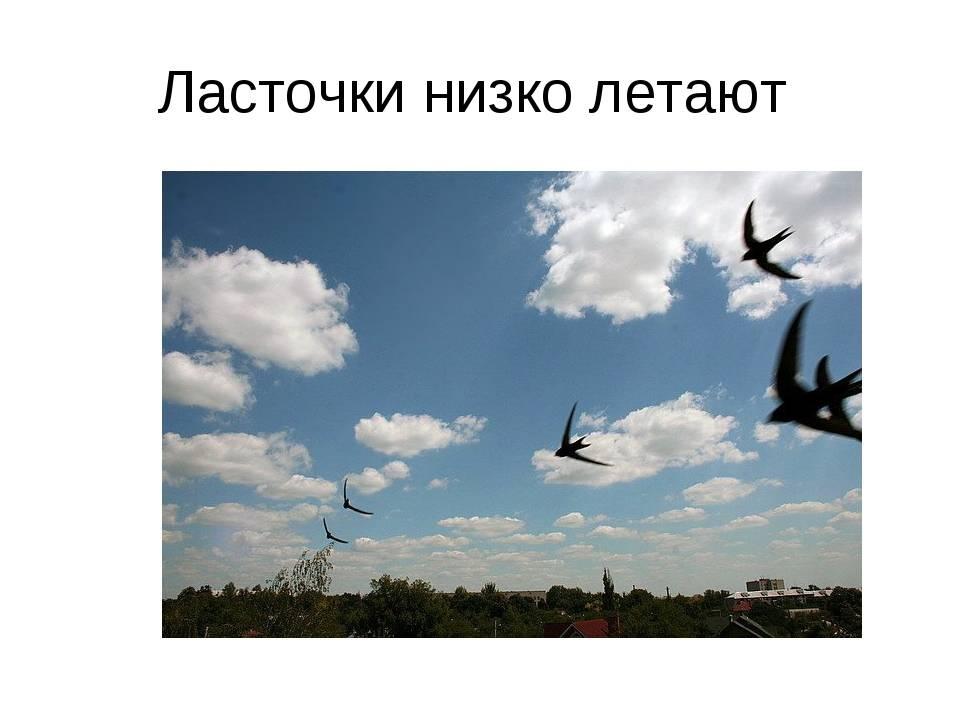 Приметы о ласточках: высоко или низко летает, свила гнездо