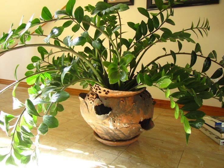 Приметы и суеверия о кротоне для дома, квартиры