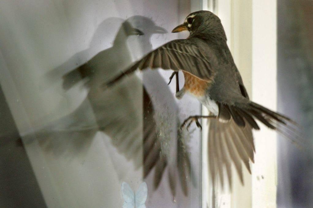 Примета птица ударилась в окно и улетела - значение