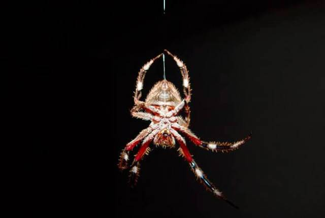 Примета — паук лезет вниз
