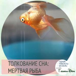Сонник рыба крупная мертвая. к чему снится рыба крупная мертвая видеть во сне - сонник дома солнца