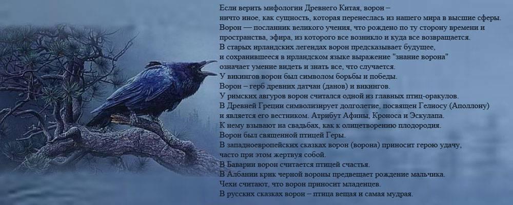 Ворон сидит – ворон спокойно сидит – сборник красивых стихов в доме солнца