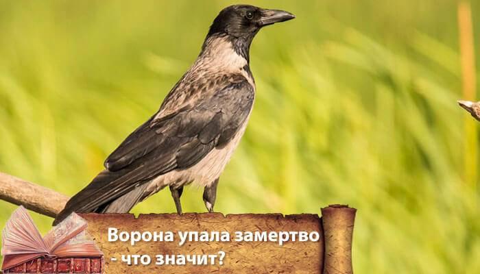 Примета: ворона села на подоконник, прилетела на окно, балкон, к чему смотрит
