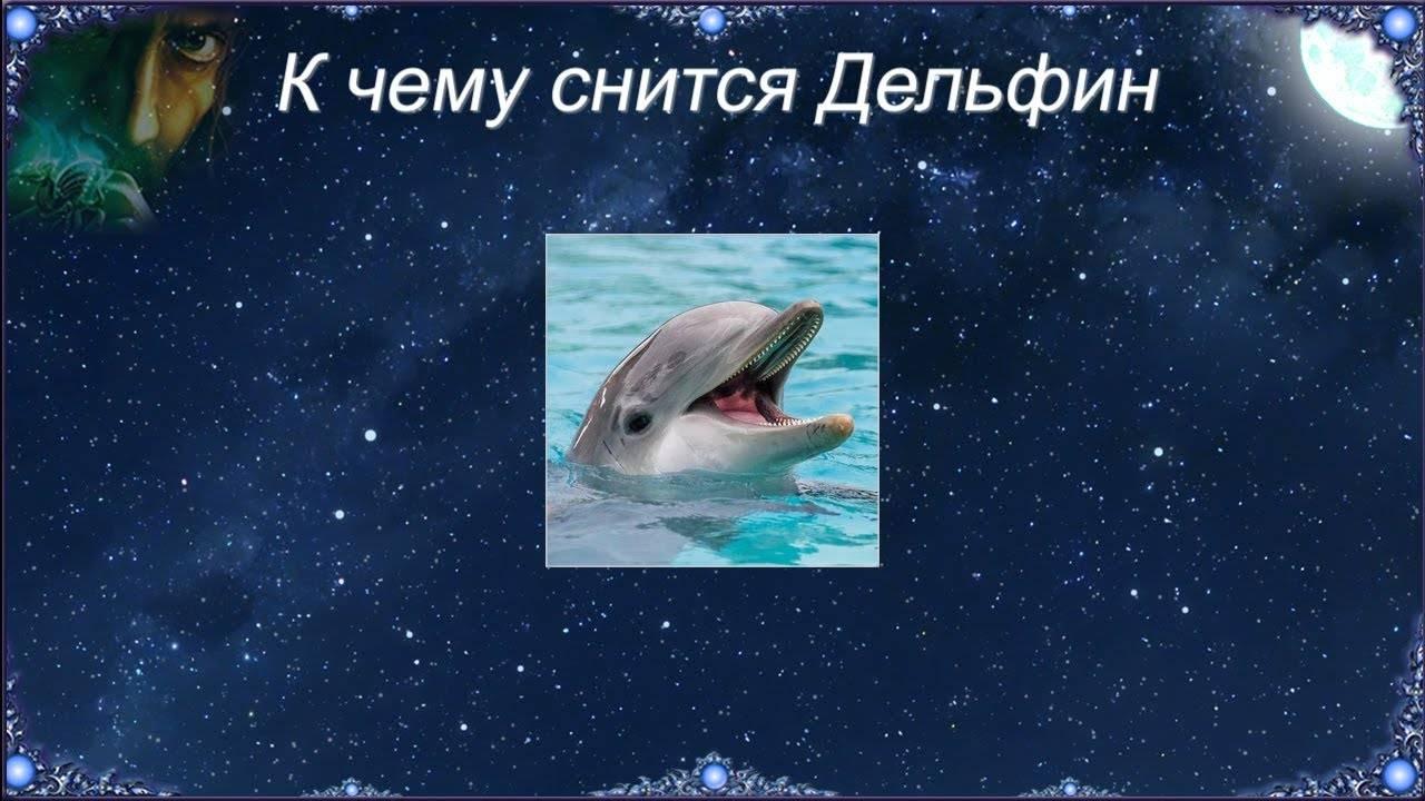 К чему снятся дельфины, сонник – дельфины во сне