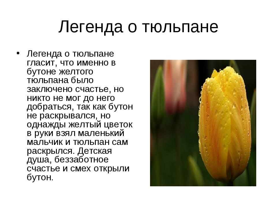 Рассказ про весенние цветы — topsamoe.ru