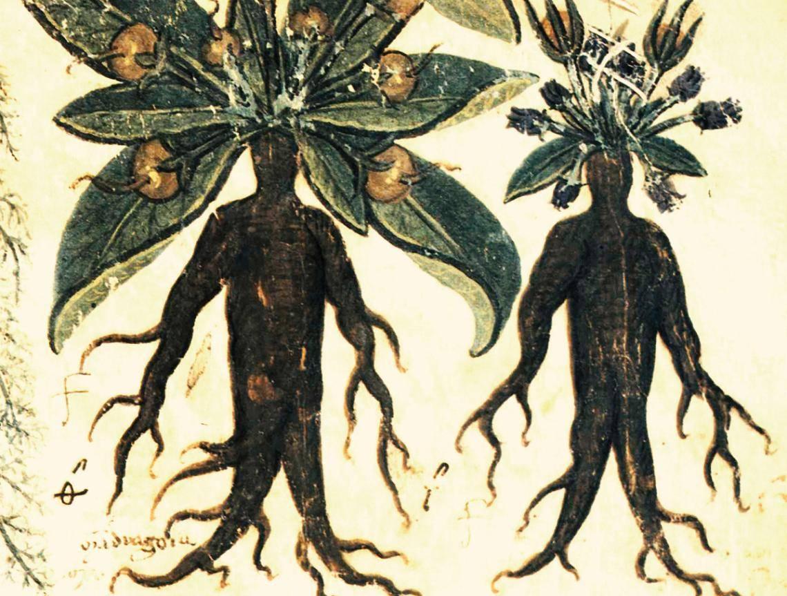 Кто такая ламия — прекрасная жрица или посланник тьмы?