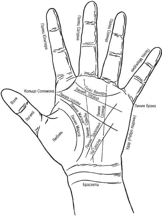 Линия солнца на руке в хиромантии: значение и толкование