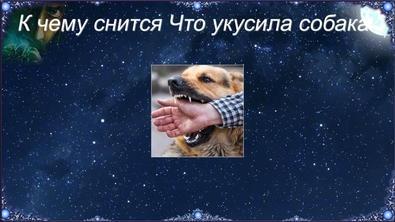 Сонник укусила больная собака. к чему снится укусила больная собака видеть во сне - сонник дома солнца