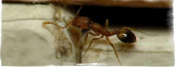 Народные приметы о муравьях - к чему появляются в доме, на могиле, на теле и прочие варианты народные приметы о муравьях - к чему появляются в доме, на могиле, на теле и прочие варианты