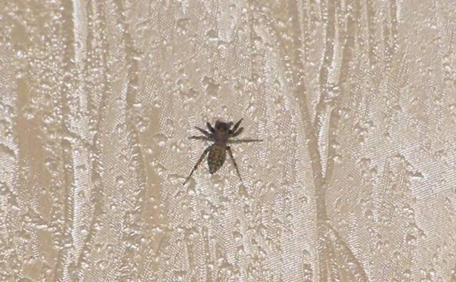 Суеверная встреча с пауками: приметы и их значения