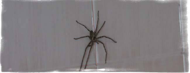 Самые точные приметы про пауков: к чему увидеть дома