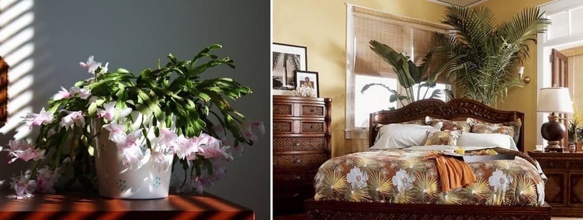 Сухие цветы в доме: хорошо или плохо, можно ли хранить сухоцветы, приметы