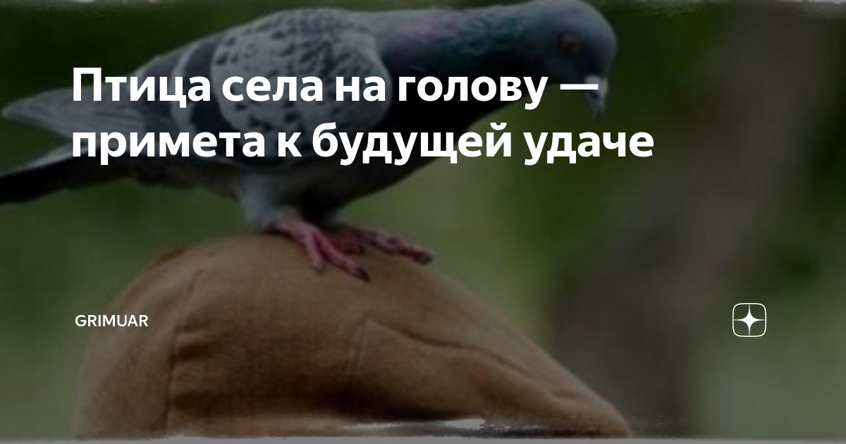 Примета: голубь врезался в человека или коснулся крылом