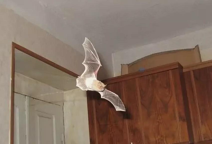 Приметы о летучей мыши в доме